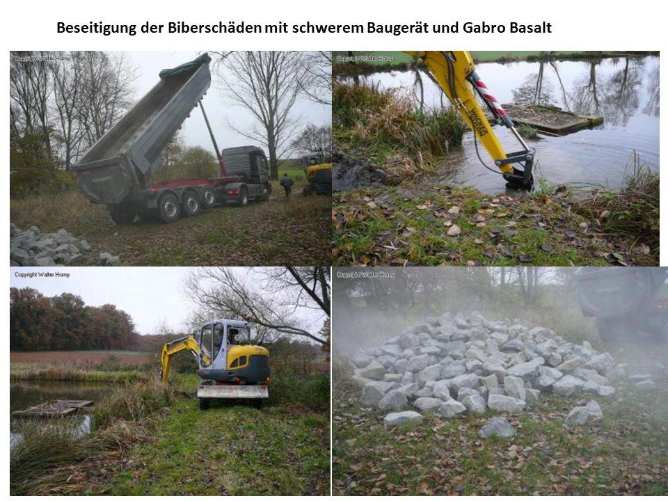 Beseitigung der Biberschäden mit schwerem Baugerät und Gabro Basalt