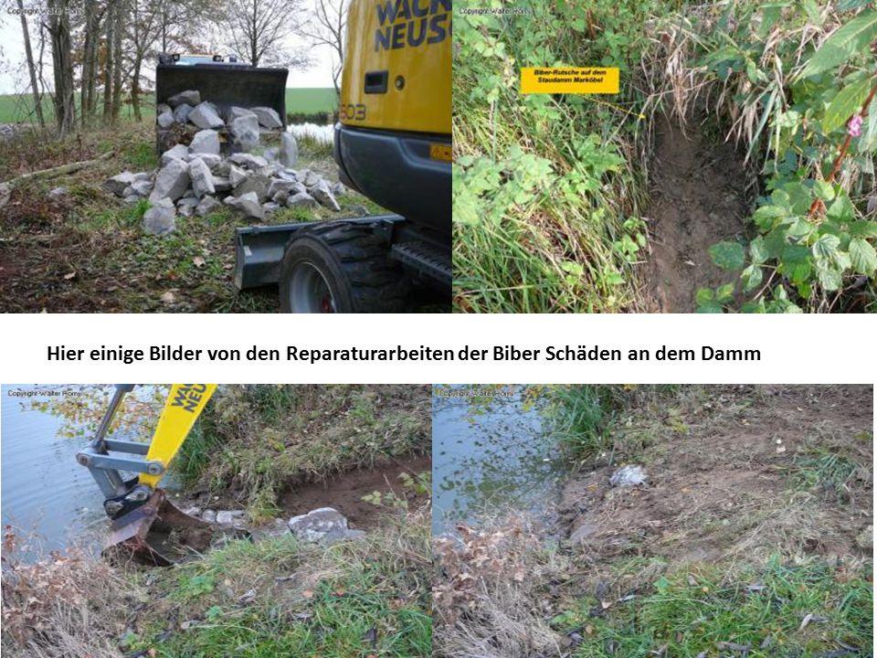 Hier einige Bilder von den Reparaturarbeiten der Biber Schäden an dem Damm