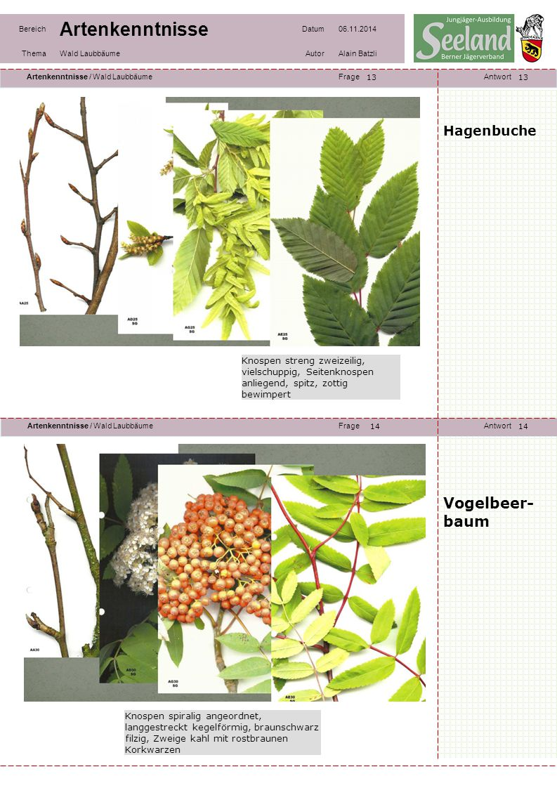 Vogelbeer- baum Hagenbuche