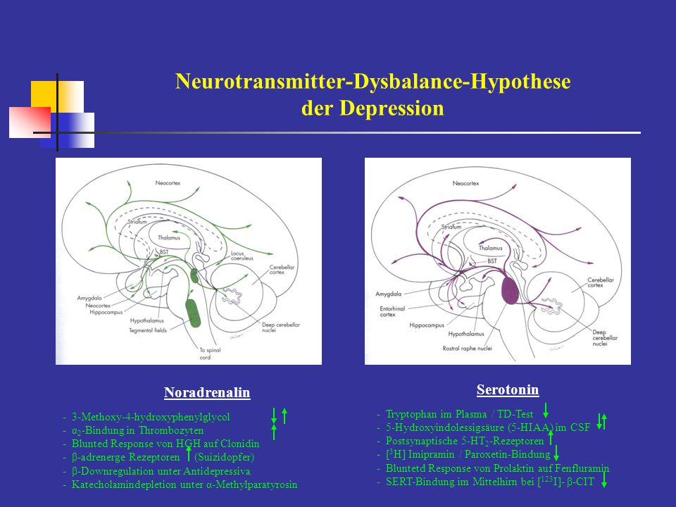 Neurotransmitter-Dysbalance-Hypothese der Depression