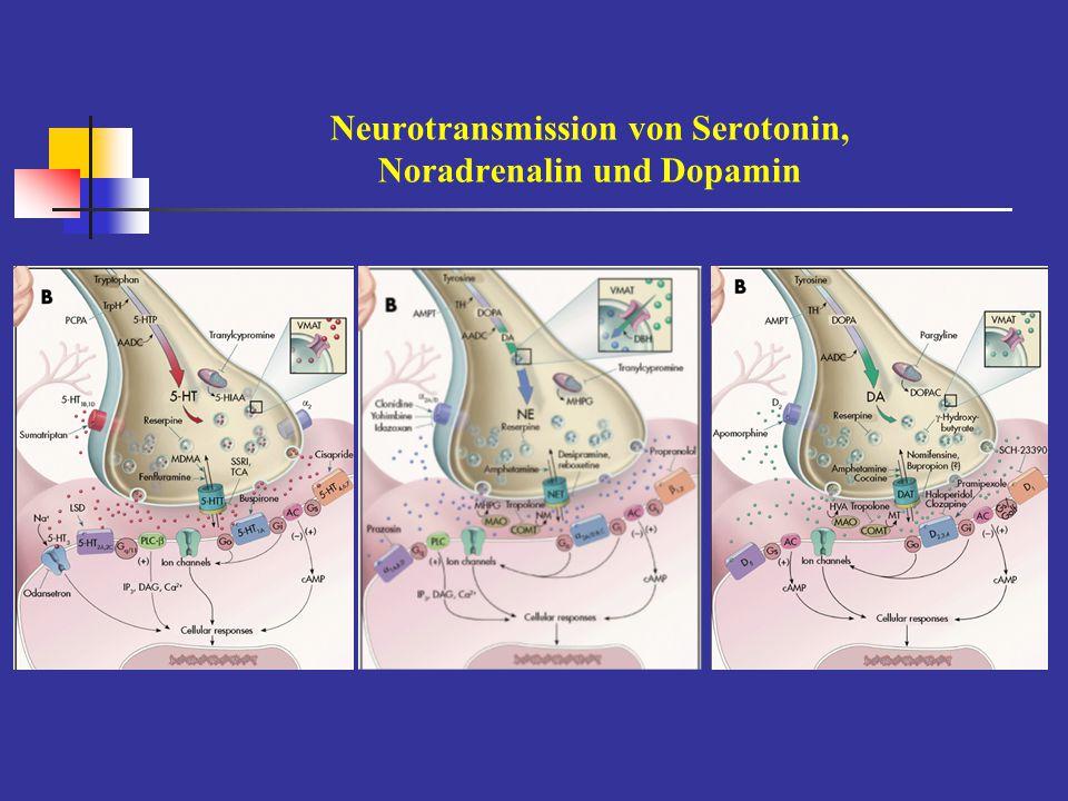 Neurotransmission von Serotonin, Noradrenalin und Dopamin