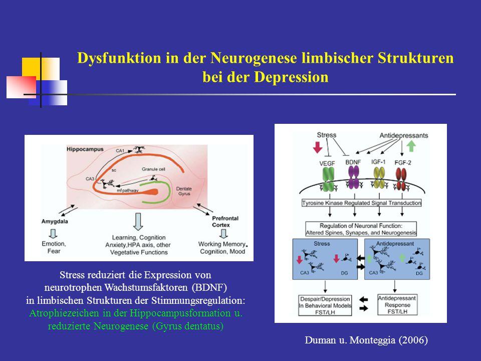 Dysfunktion in der Neurogenese limbischer Strukturen bei der Depression