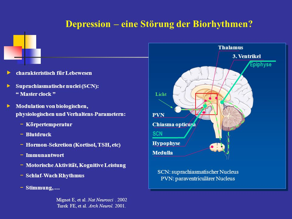 Depression – eine Störung der Biorhythmen