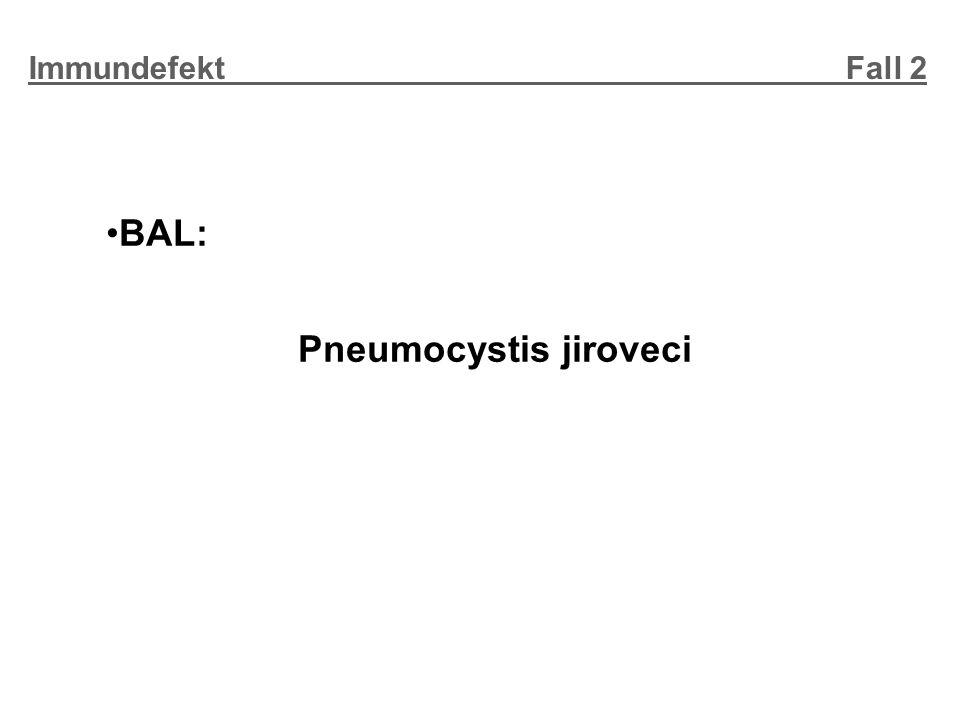 Immundefekt Fall 2 BAL: Pneumocystis jiroveci.