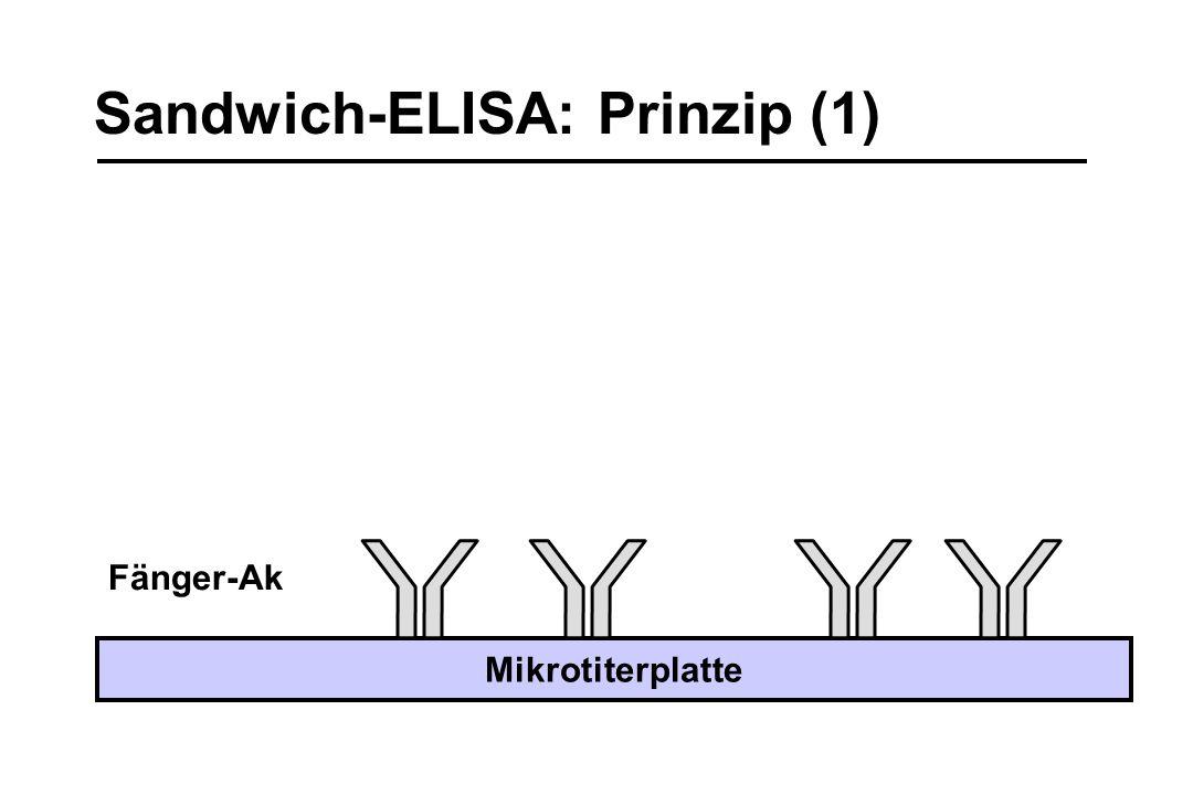 Sandwich-ELISA: Prinzip (1)