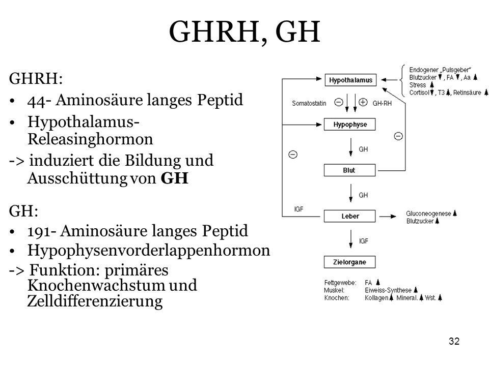 GHRH, GH GHRH: 44- Aminosäure langes Peptid