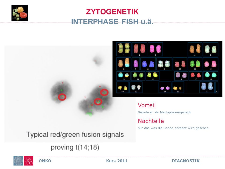 ZYTOGENETIK INTERPHASE FISH u.ä.