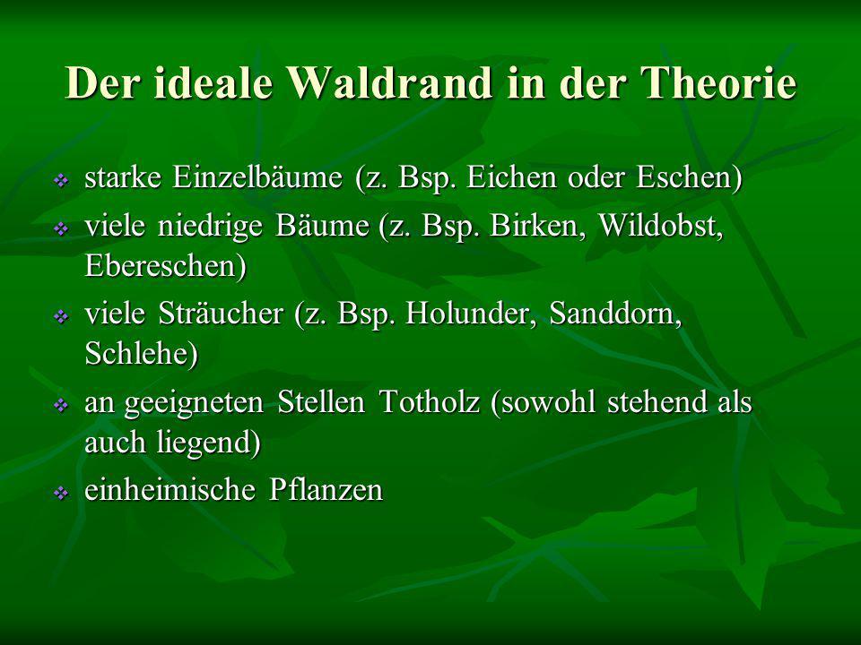 Der ideale Waldrand in der Theorie