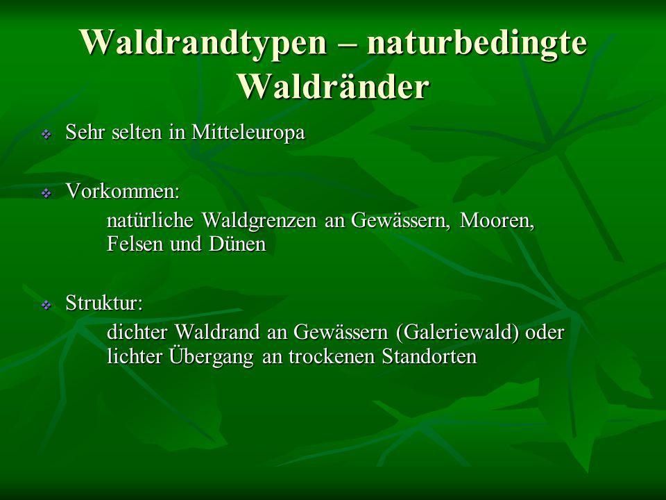 Waldrandtypen – naturbedingte Waldränder
