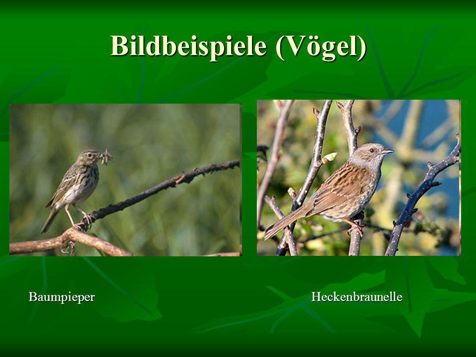 Bildbeispiele (Vögel)