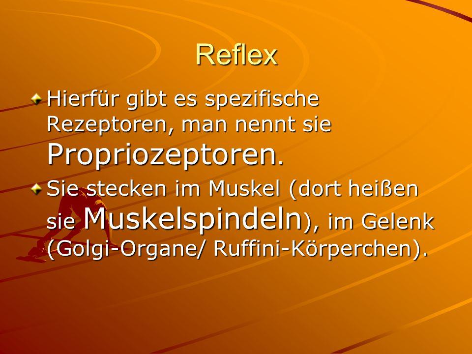 Reflex Hierfür gibt es spezifische Rezeptoren, man nennt sie Propriozeptoren.