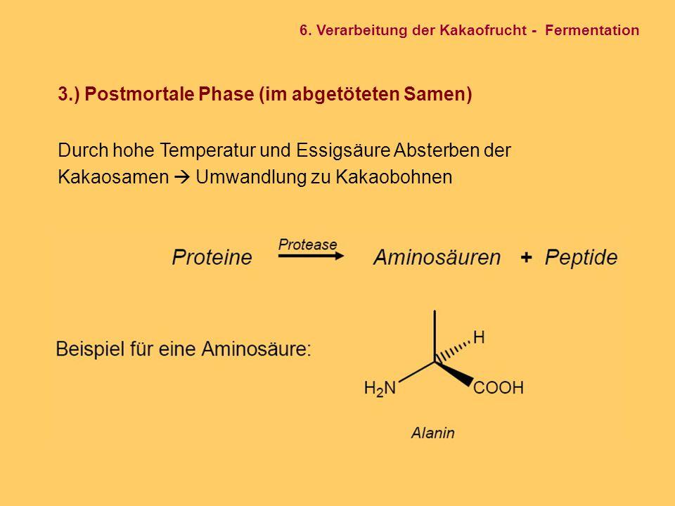 3.) Postmortale Phase (im abgetöteten Samen)