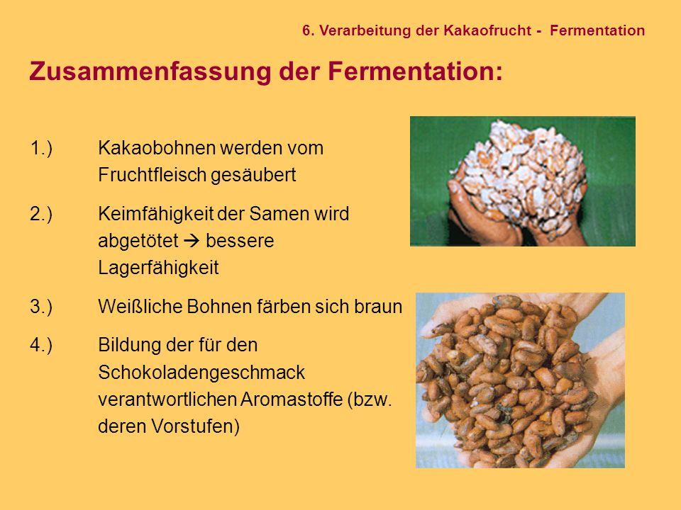 Zusammenfassung der Fermentation: