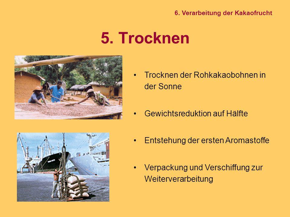 5. Trocknen Trocknen der Rohkakaobohnen in der Sonne