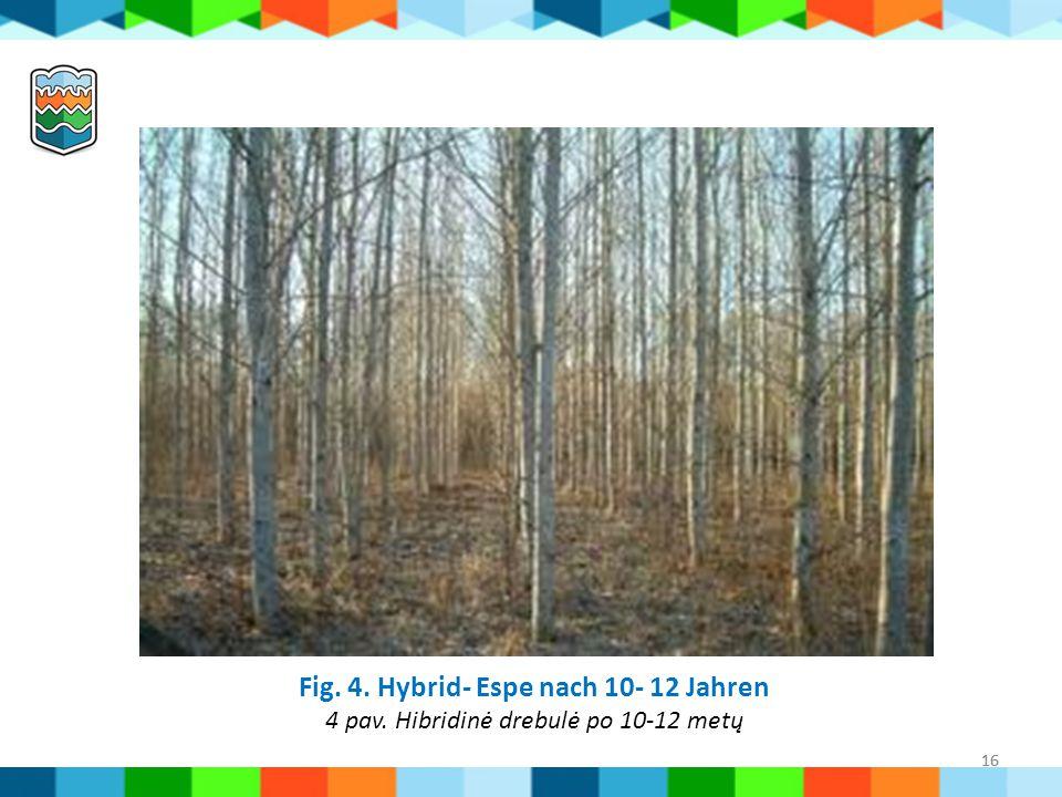 Fig. 4. Hybrid- Espe nach 10- 12 Jahren 4 pav