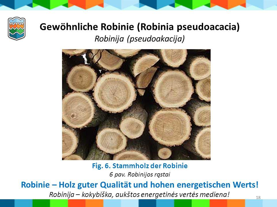 Fig. 6. Stammholz der Robinie 6 pav. Robinijos rąstai