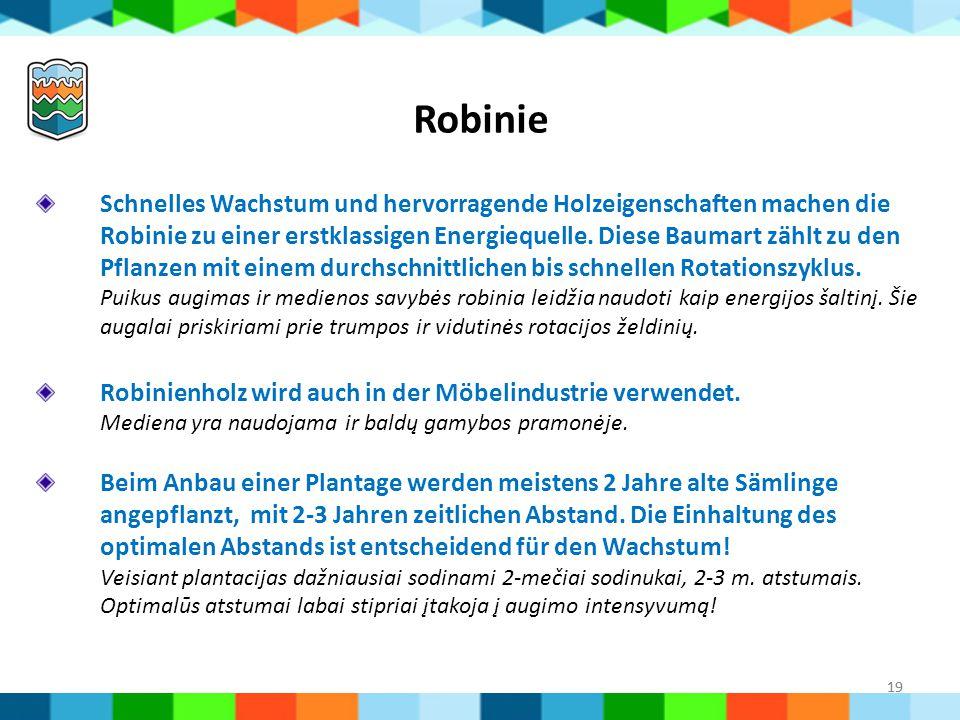 Robinie