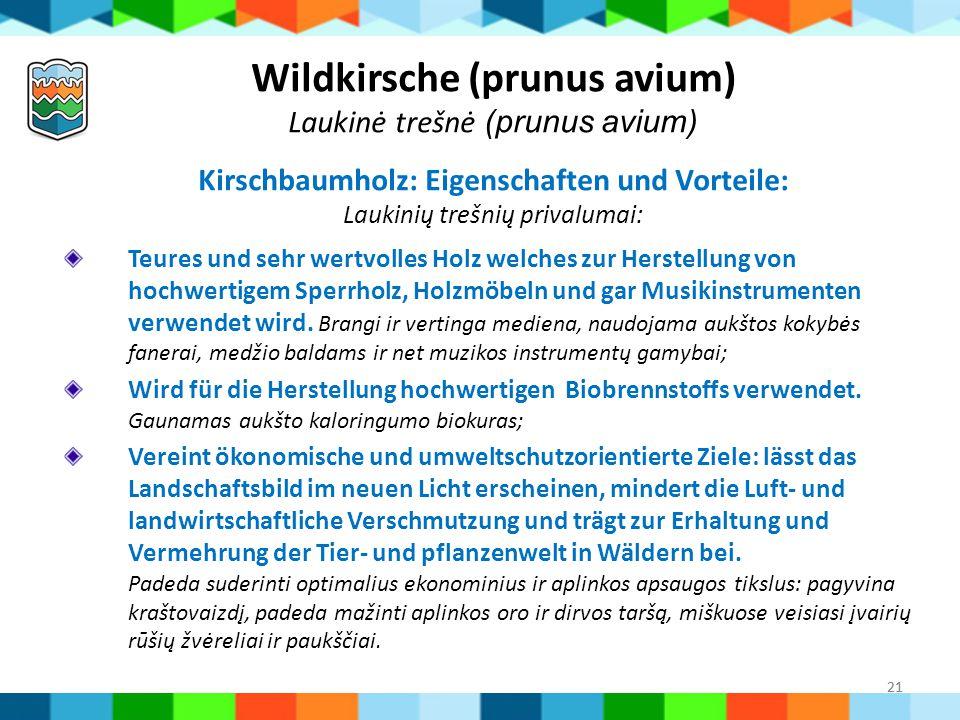 Wildkirsche (prunus avium) Kirschbaumholz: Eigenschaften und Vorteile: