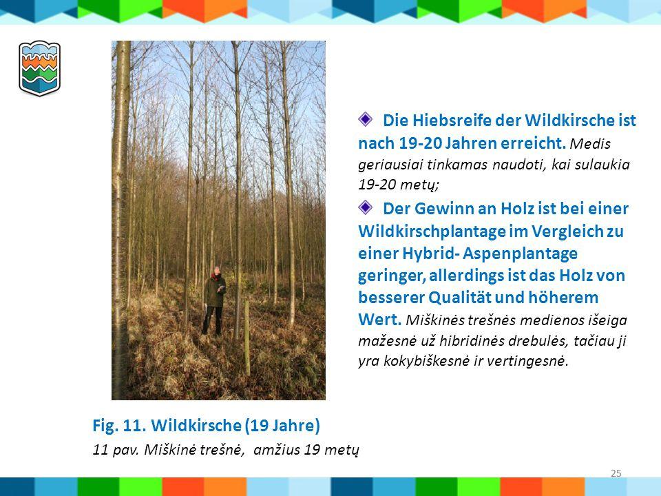 Fig. 11. Wildkirsche (19 Jahre) 11 pav. Miškinė trešnė, amžius 19 metų
