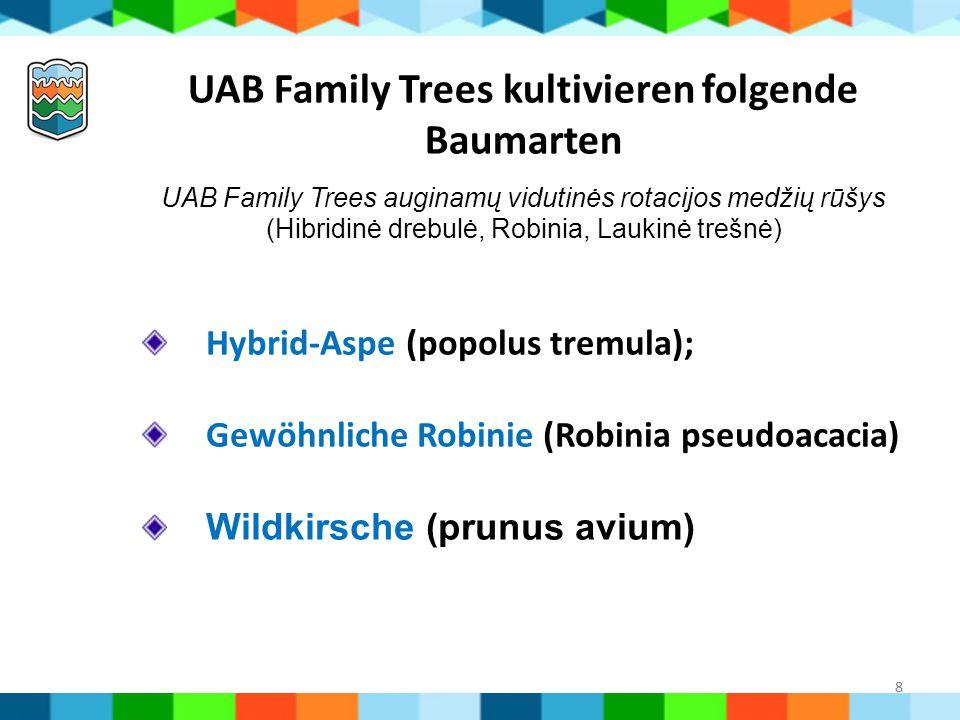 UAB Family Trees kultivieren folgende Baumarten UAB Family Trees auginamų vidutinės rotacijos medžių rūšys (Hibridinė drebulė, Robinia, Laukinė trešnė)