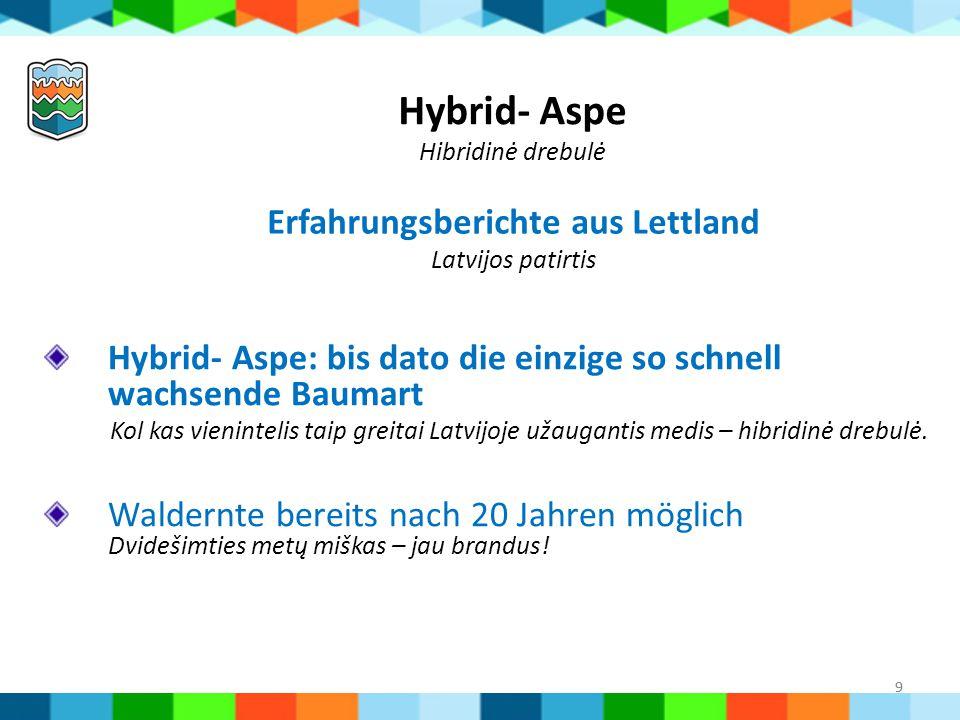 Hybrid- Aspe Hibridinė drebulė