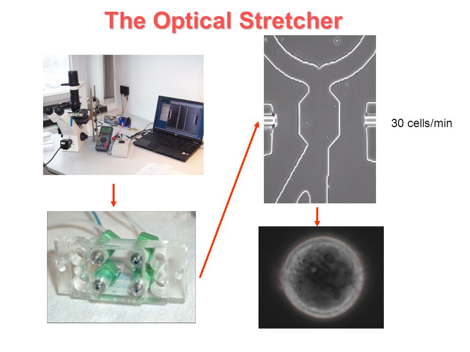 The Optical Stretcher 30 cells/min