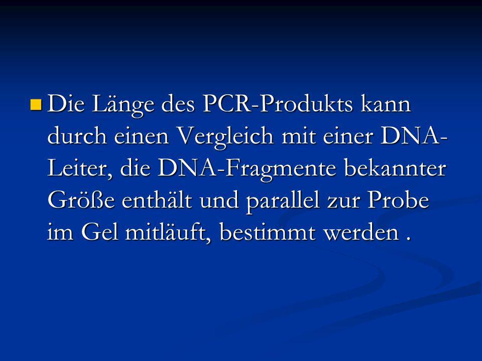 Die Länge des PCR-Produkts kann durch einen Vergleich mit einer DNA-Leiter, die DNA-Fragmente bekannter Größe enthält und parallel zur Probe im Gel mitläuft, bestimmt werden .