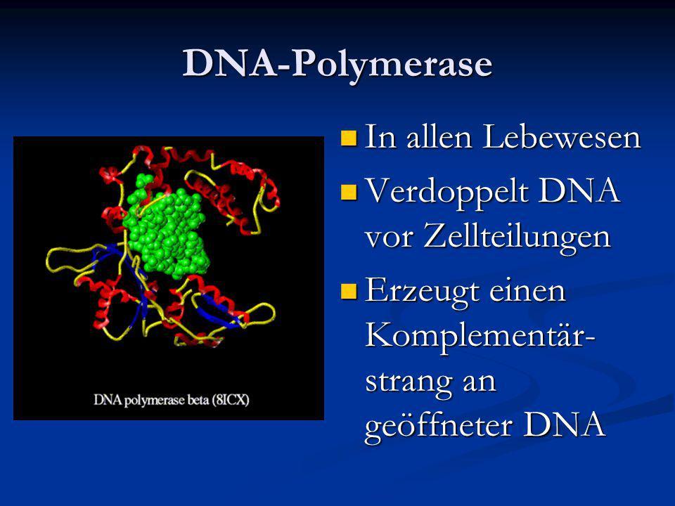 DNA-Polymerase In allen Lebewesen Verdoppelt DNA vor Zellteilungen