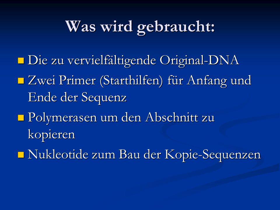 Was wird gebraucht: Die zu vervielfältigende Original-DNA