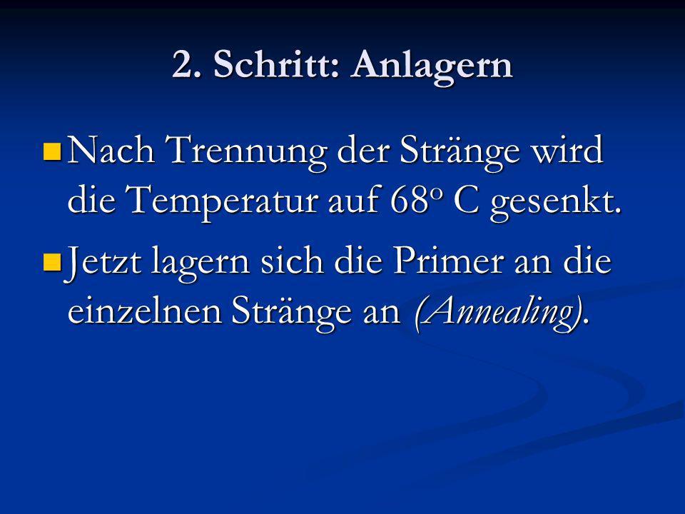 2. Schritt: Anlagern Nach Trennung der Stränge wird die Temperatur auf 68o C gesenkt.