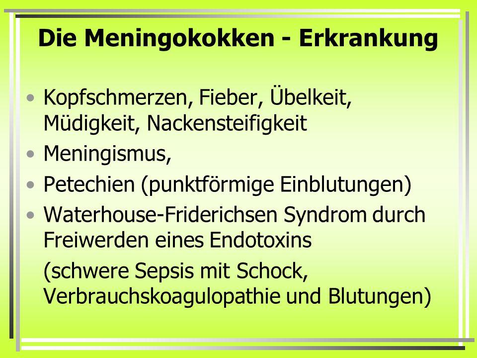 Die Meningokokken - Erkrankung