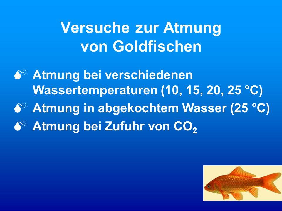 Versuche zur Atmung von Goldfischen