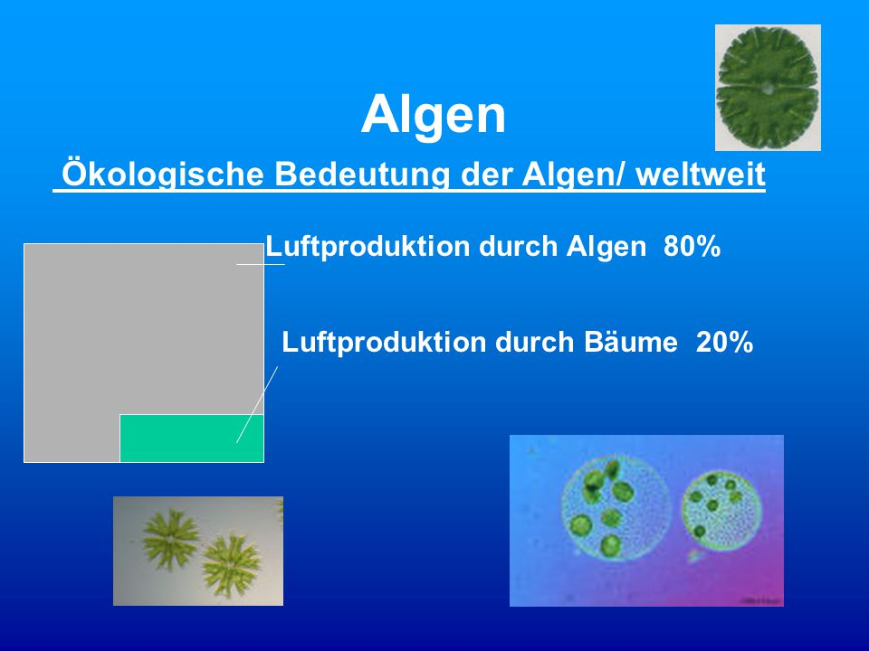 Algen Ökologische Bedeutung der Algen/ weltweit