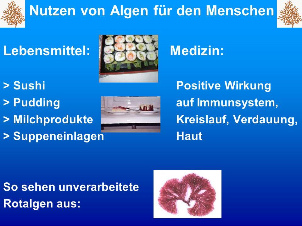 Nutzen von Algen für den Menschen Lebensmittel: Medizin: