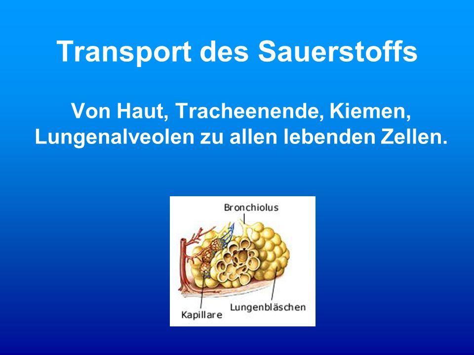 Transport des Sauerstoffs