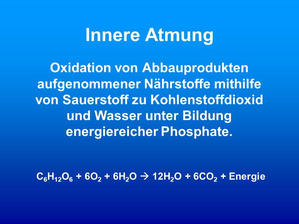 C6H12O6 + 6O2 + 6H2O  12H2O + 6CO2 + Energie