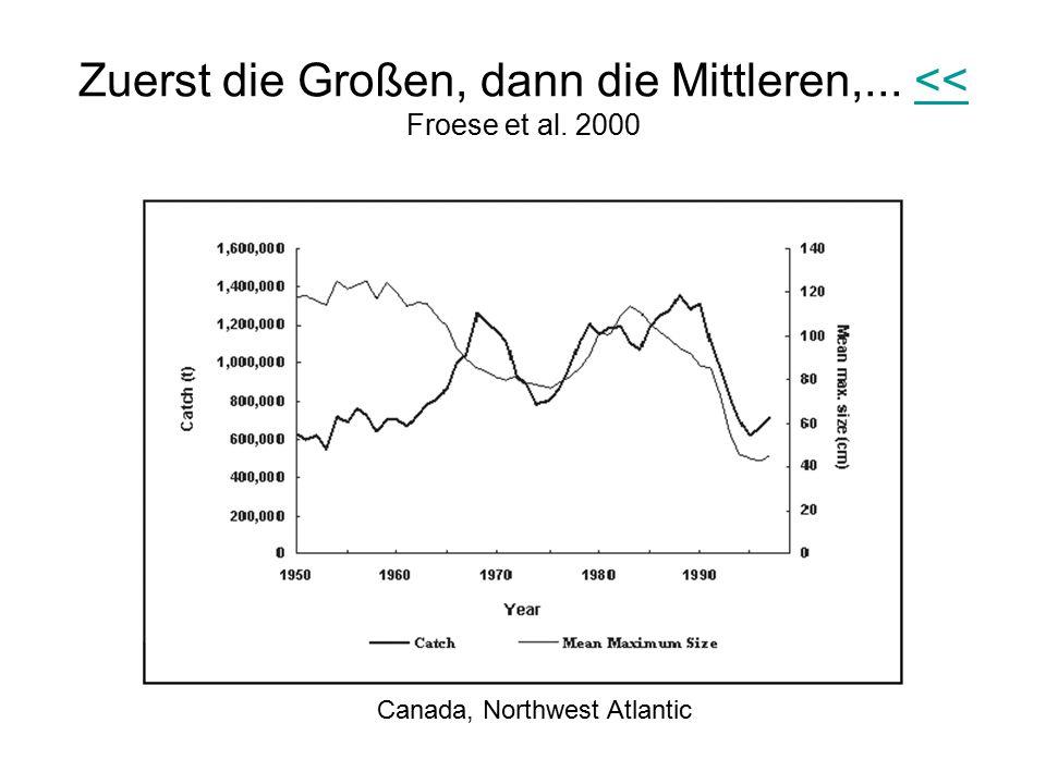 Zuerst die Großen, dann die Mittleren,... << Froese et al. 2000
