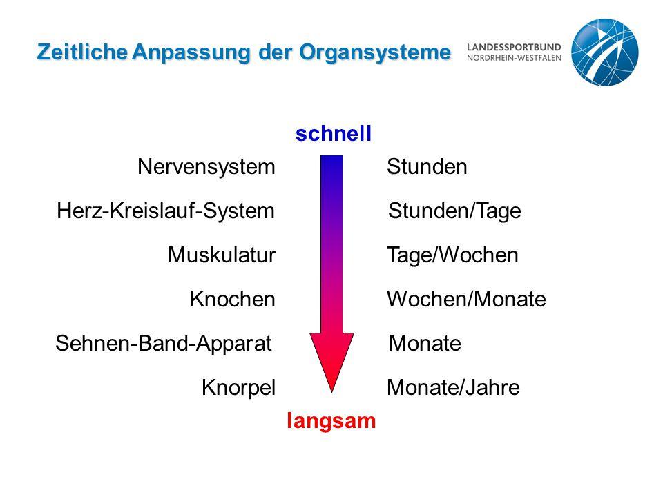 Zeitliche Anpassung der Organsysteme