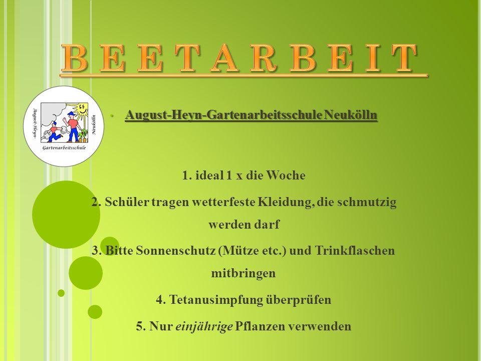 B E E T A R B E I T August-Heyn-Gartenarbeitsschule Neukölln