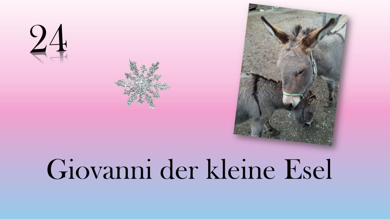 Giovanni der kleine Esel