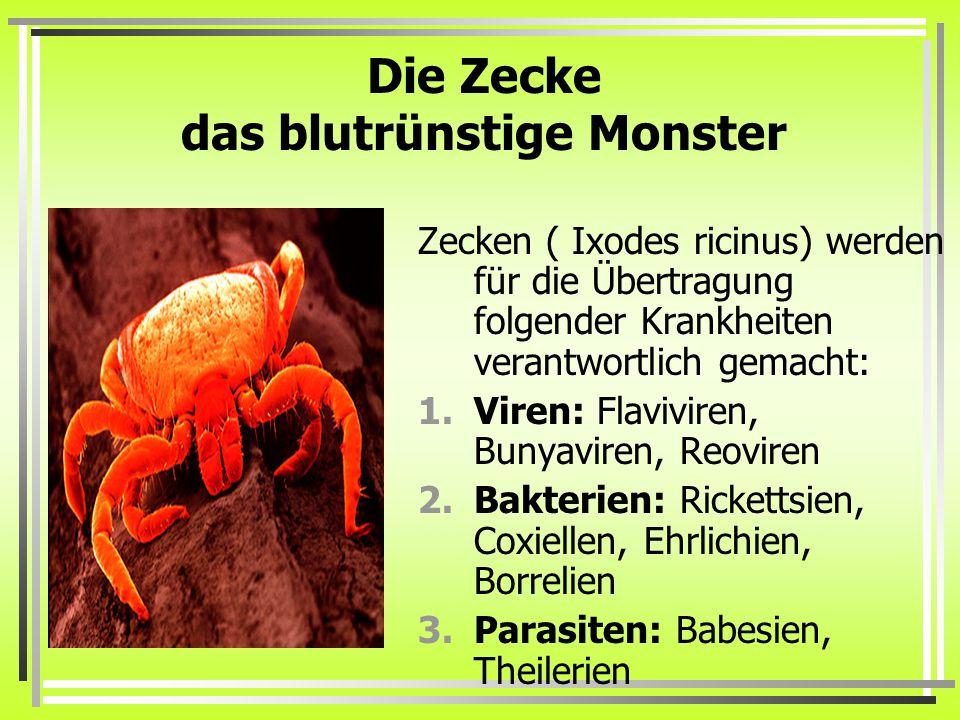 Die Zecke das blutrünstige Monster