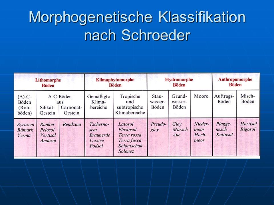 Morphogenetische Klassifikation nach Schroeder