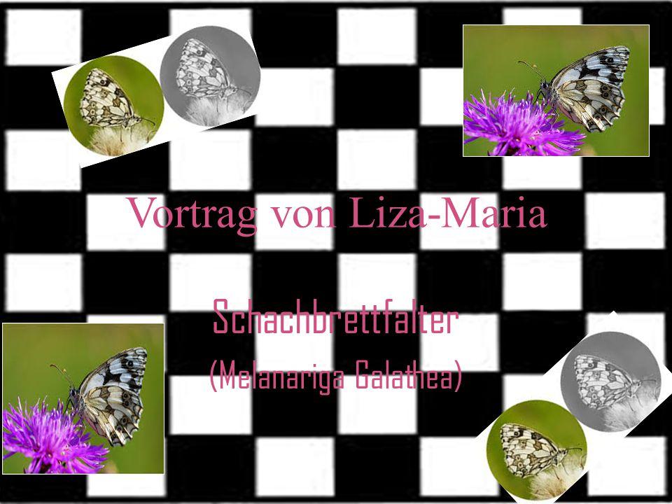 Vortrag von Liza-Maria