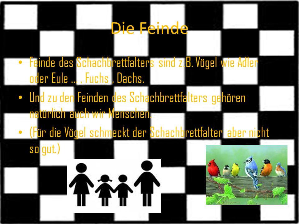 Die Feinde Feinde des Schachbrettfalters sind z.B. Vögel wie Adler oder Eule … , Fuchs , Dachs.