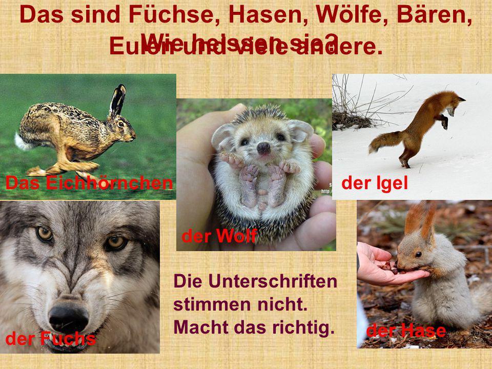 Das sind Füchse, Hasen, Wölfe, Bären, Eulen und viele andere.