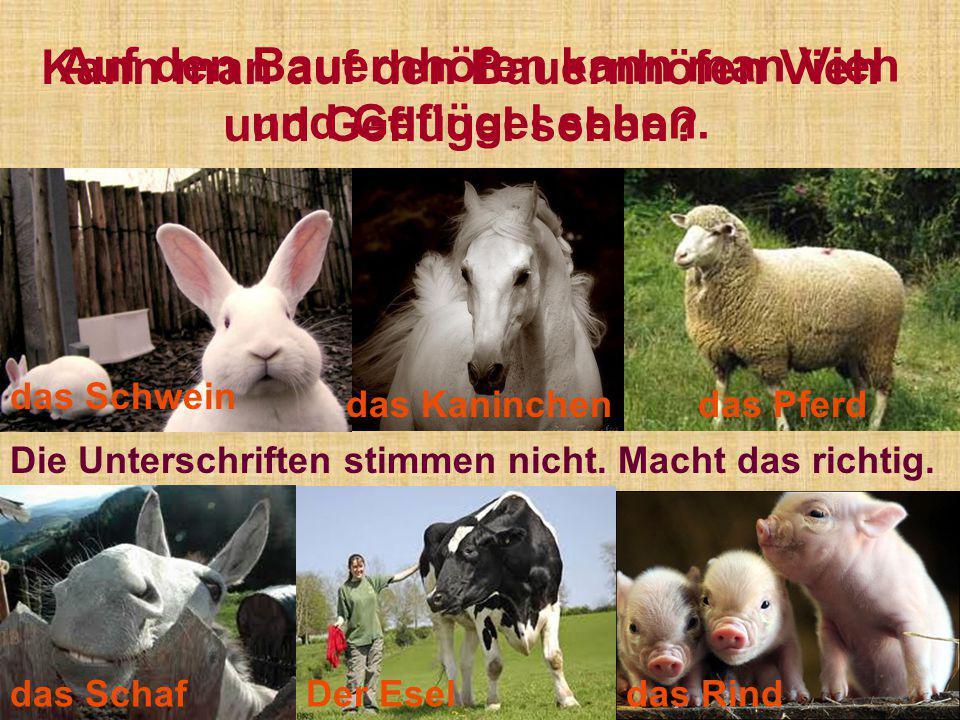 Auf den Bauernhöfen kann man Vieh und Geflügel sehen.