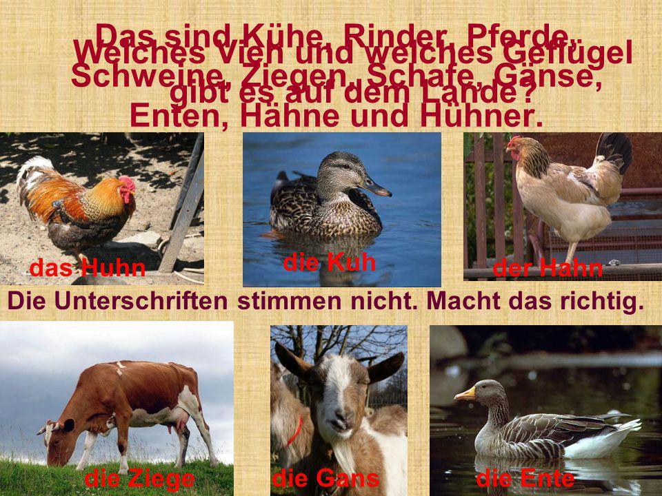 Welches Vieh und welches Geflügel gibt es auf dem Lande