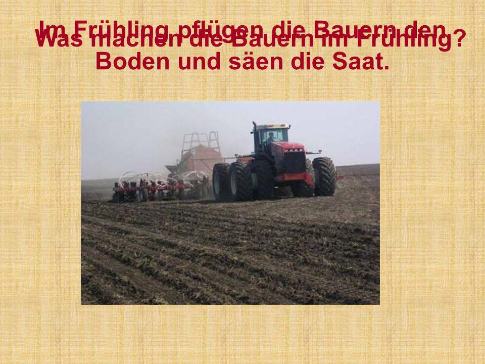 Im Frühling pflügen die Bauern den Boden und säen die Saat.