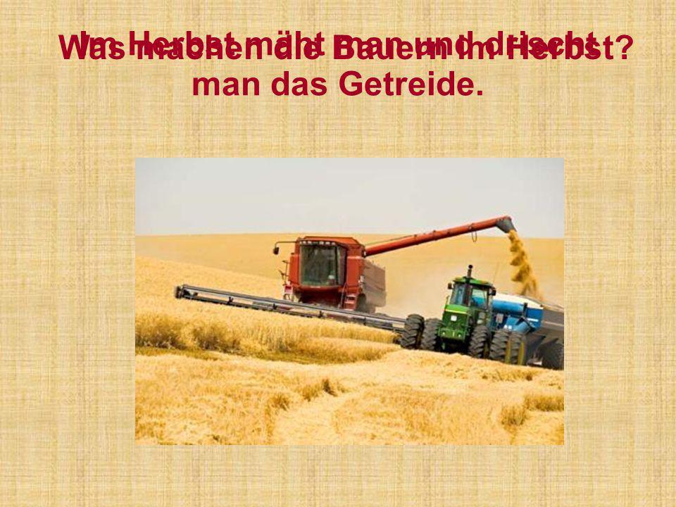 Im Herbst mäht man und drischt man das Getreide.