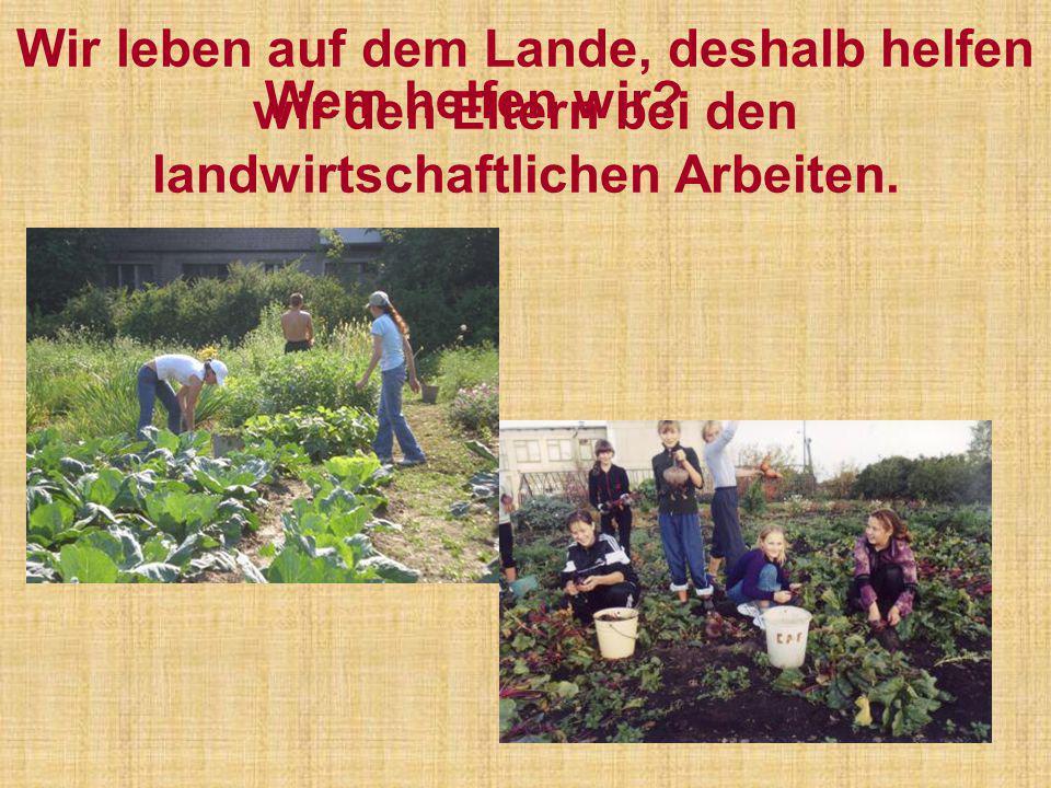 Wir leben auf dem Lande, deshalb helfen wir den Eltern bei den landwirtschaftlichen Arbeiten.